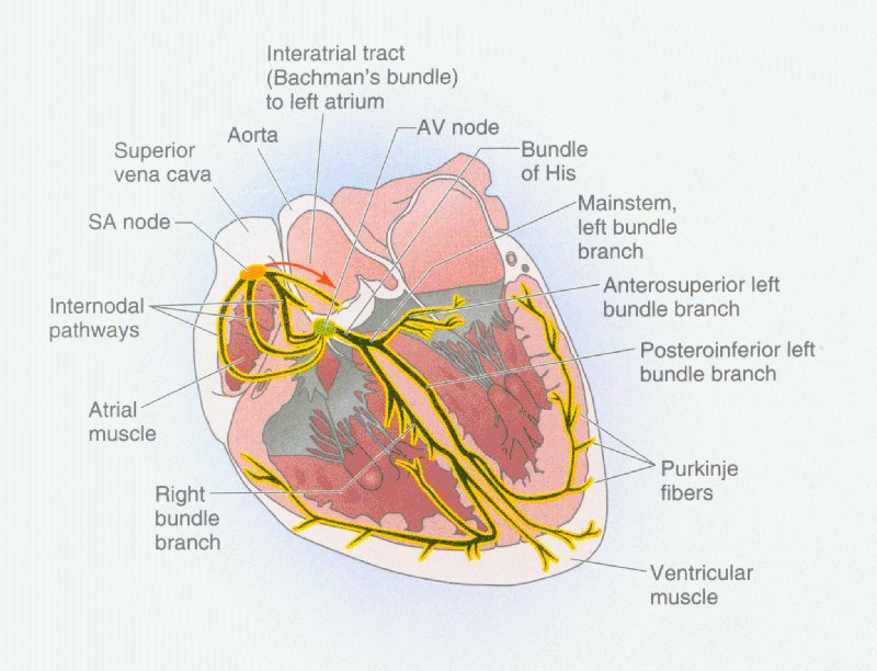 Heart site home page boron05pg484 88k ccuart Images