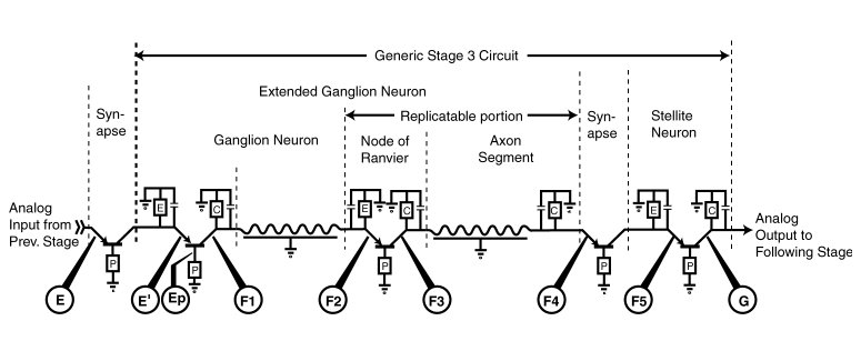 Neuron circuit diagram auto electrical wiring diagram signal projection and the neural code rh neuronresearch net blank neuron diagram blank neuron diagram ccuart Image collections
