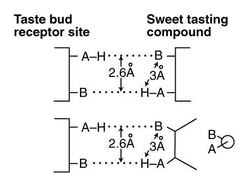 Chemoreceptors Of Taste And Smell